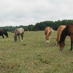 So many horses to visit with in the pasture