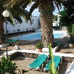 Palm Tree and Pool