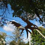 Fun folk art - Bald eagle made from moose antlers