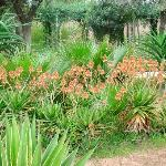 Plantes vertes en fleur