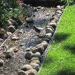 Stellar's Jay in the babbling brook