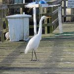 Some random bird on the dock before boarding.