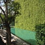 beautiful green wall next to the pool