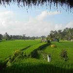 The wonderful view over the rice fields from the dining room