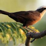 Great birding