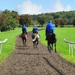 The gallops across the road from the B & B