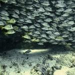 einer von vielen schönen Fischschwärmen