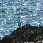 sea bird on rocks