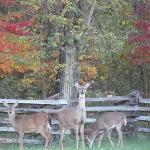 October 16 2012. Early risers in the park.