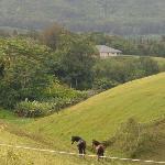 Horse pasture across the street from the Kauai Country Inn