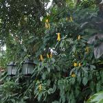 Lanterns in the jungle canopy