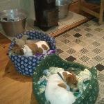 Dogs sleeping by the fire