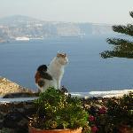 """panoramique et """"gato"""""""