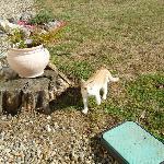 hosts' cat Garfield