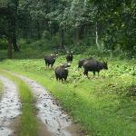 Parambikulam Wildlife