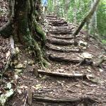 A walk through the jungle...