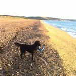 Brodie at Torcross