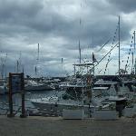 puerto carseo