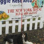 We provide a rest area for dogs and their owners during Harvest Festival