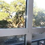 Tree level at 3rd floor, windows were dirty outside