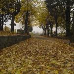 viale in autunno..