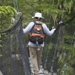 Sherri Descending the Canopy Walkway