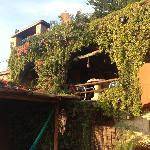 Oasis con plantas