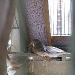 Finch in bird cage in hallway to loby
