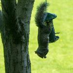 Sneaky Squirrel in the Garden