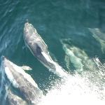 White sided dolphins, view from the bow of the boat :)