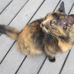 Matty Cat