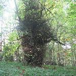 Tilgroet træ.