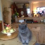Elliot the Cat!