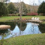 Pond out back