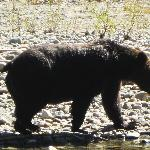 Bute Inlet, Orford River - Grizzly Bear Viewing