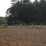 Everyone picking cranberries
