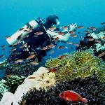 Dive with at the Similan islands