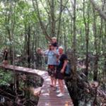 Wooden platform at the mangrove forests at Koh Taen
