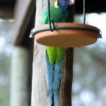 parrot at the verandah