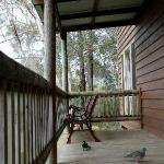 birds at the verandah