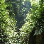 Gorge in Lore Lindu NP near Kamarora