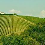 A tuscan wine yard