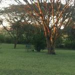 Morning sun hits Keekerok garden before early game drive