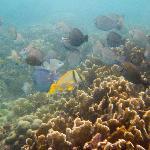 snorkeling at zapatilla