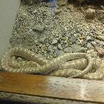 snake display