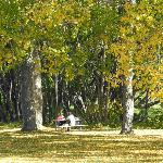 Picnic tables under fall foliage, Confederation Park, Calgary
