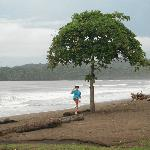 Beach Tree Playa Venao Panama