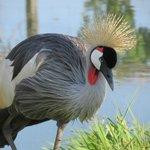 Hemker Park and Zoo