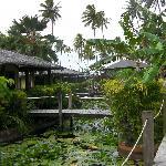 Koi pond rooms
