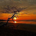 Langosta Sunset